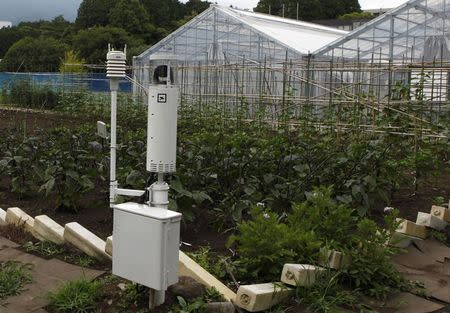 Sensors measuring temperature and humidity are seen at a test site for Fujitsu's cloud-based farming system in Numazu, Shizuoka prefecture June 27, 2014. REUTERS/Sophie Knight