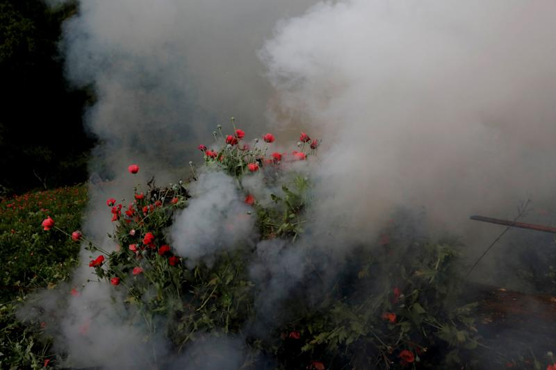 Soldiers burn an illegal opium plantation near Pueblo Viejo