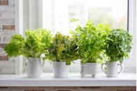 """<p>Nothing livens up a dish like fresh <a href=""""https://www.housebeautiful.com/lifestyle/g33012494/best-perennial-herbs/"""" rel=""""nofollow noopener"""" target=""""_blank"""" data-ylk=""""slk:herbs"""" class=""""link rapid-noclick-resp"""">herbs</a>, which is why you should always have some on hand. The best way to do that? Grow them right inside your home. Whether you just want some fresh thyme or you're looking to grow a variety of herbs, there are plenty of gorgeous indoor planters and gardens to shop. </p><p>From vertical garden planters to stackable ones, we rounded up the best herb garden planters, systems, and kits for every budget. Not only will they <a href=""""https://www.housebeautiful.com/room-decorating/kitchens/g623/beautiful-designer-kitchens/"""" rel=""""nofollow noopener"""" target=""""_blank"""" data-ylk=""""slk:look great in your kitchen"""" class=""""link rapid-noclick-resp"""">look great in your kitchen </a>(or wherever you choose to display them), but they'll also add flavor to your meals year-round. If you're more of a gardening beginner, look out for self-watering options and easy-to-use kits. Don't have a ton of room? There are also hanging and mounted herb gardens, which are ideal for small spaces. You'll have fresh herbs at your fingertips in no time. <br></p>"""