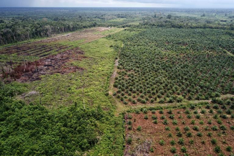 The rapid growth  of palm oil plantations has been blamed for the destruction of tropical forests that are home to many endangered species, and forest fires that occur every year during the dry season due to illegal slash-and-burn clearance