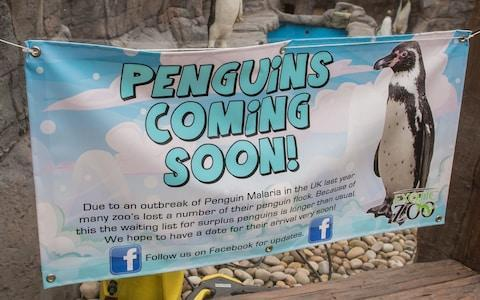 Telford Exotic Zoo has been forced to fill its new penguin exhibit with models - Credit: Adam Hughes/SWNS.com