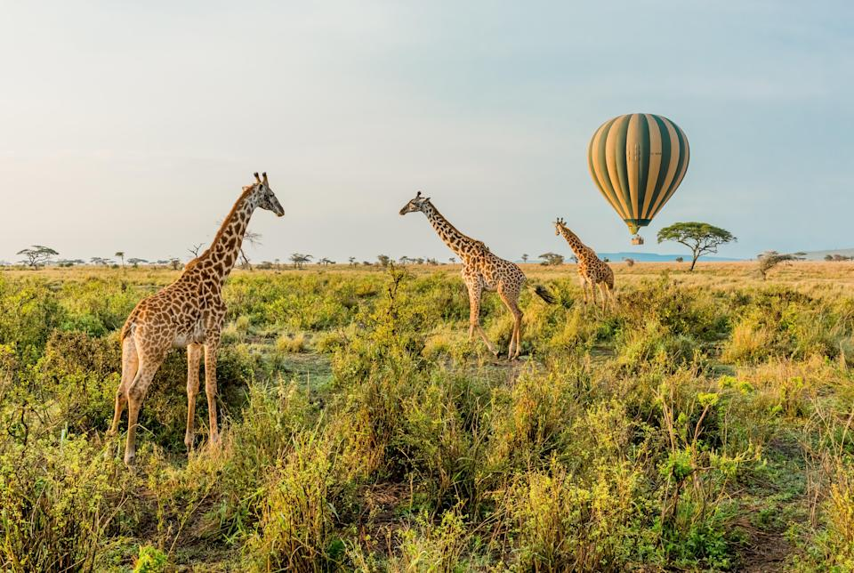 All travelers to Tanzania will need to fill out a questionnaire online.
