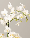 "<p>Got orchids on your mind? We don't blame ya, the delicate spring flowers look stunning on any living room table. The Sill offers a selection that includes white, spotted, purple, sunset and fuchsia orchids in a range of sizes priced from $75-$95. Plus, they offer <a href=""https://www.thesill.com/collections/workshops"" rel=""nofollow noopener"" target=""_blank"" data-ylk=""slk:$10 online webinars"" class=""link rapid-noclick-resp"">$10 online webinars</a> to help you maximize the longevity of your plant.</p><p><a class=""link rapid-noclick-resp"" href=""https://go.redirectingat.com?id=74968X1596630&url=https%3A%2F%2Fwww.thesill.com%2Fcollections%2Flive-plants&sref=https%3A%2F%2Fwww.oprahmag.com%2Flife%2Fg32053111%2Fbest-flower-delivery-services%2F"" rel=""nofollow noopener"" target=""_blank"" data-ylk=""slk:SHOP NOW"">SHOP NOW</a> </p>"