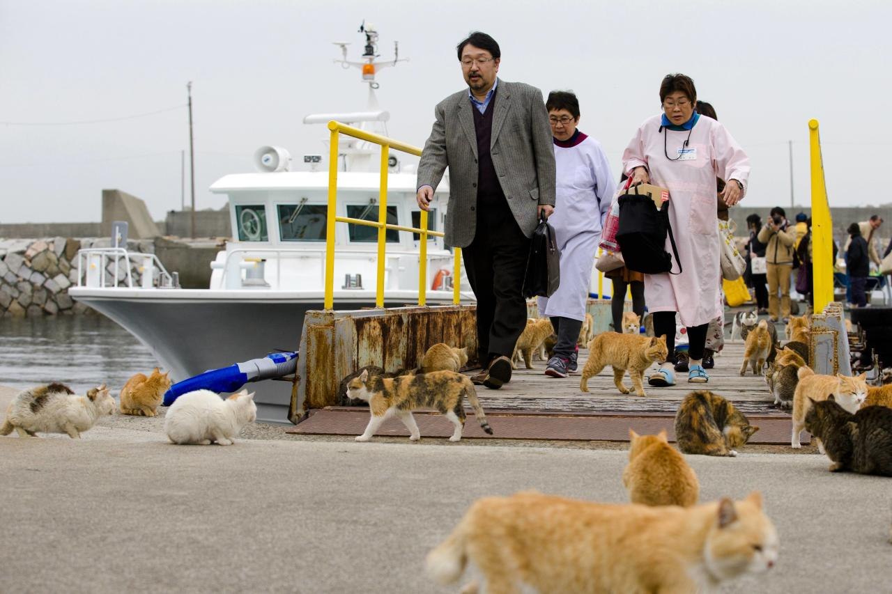 Cats surround people as they get off a boat at the harbour on Aoshima Island in Ehime prefecture in southern Japan February 25, 2015. An army of cats rules the remote island in southern Japan, curling up in abandoned houses or strutting about in a fishing village that is overrun with felines outnumbering humans six to one. Picture taken February 25, 2015. To match story JAPAN-CATS/ REUTERS/Thomas Peter (JAPAN - Tags: SOCIETY ANIMALS TRAVEL)