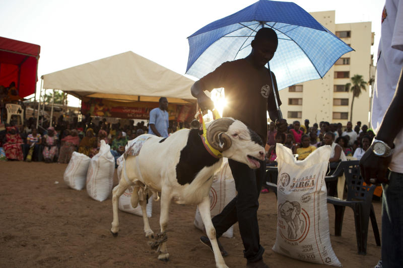 """In this Wednesday, Oct. 3, 2012 photo, Abdou Aziz Mare uses an umbrella to protect his sheep Dogo from the sun, as he walks him around the ring during the final judging portion of the Khar Bii regional final in the SICAP neighborhood of Dakar, Senegal. Mare, who spends up to four hours a day with his sheep, explained that this was Dogo's first exposure to Dakar's blazing sun and his first descent down from the sheltered rooftop terrace where he was born and raised. In a nation where sheep are given names and kept inside homes as companion animals, the most popular show on television is """"Khar Bii,"""" or literally, """"This Sheep"""" in the local Wolof language. It's an American Idol-style nationwide search for Senegal's most perfect specimen ahead of the Eid al-Adha festival, known locally as Tabaski. (AP Photo/Rebecca Blackwell)"""