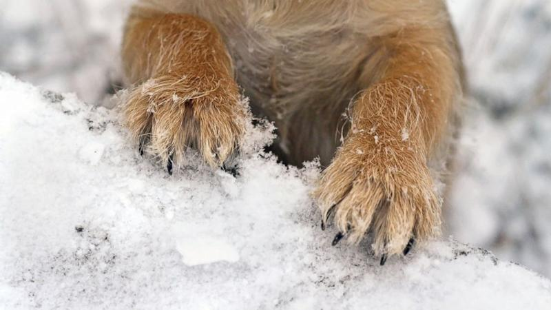 A Dog's Best 'Pawtection' From Cold Weather and Salt