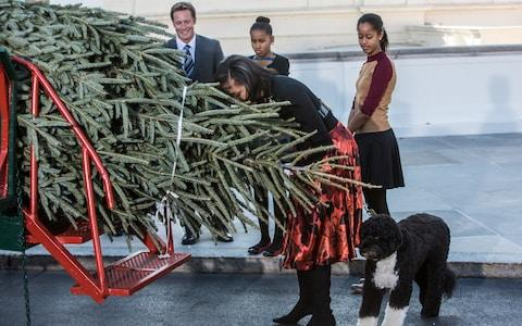 The Obama family taking delivery of a 19-foot Fraser fir Christmas tree for the White House in 2012. - Credit: Getty Images/Brendan Hoffman