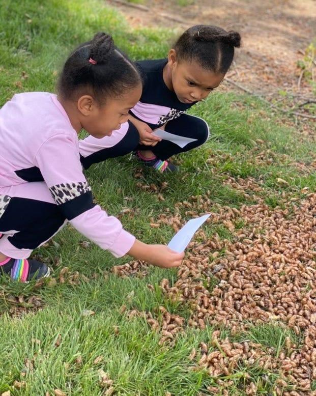 Twins Meena and Nyla Claytor-Howard, 4, find a group of cicadas at their grandmother's home in Burke, Va.