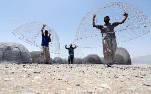 The fishing cage, or wire net, used in the Gulf of Oman is shaped like an igloo, with an oval-shaped inlet