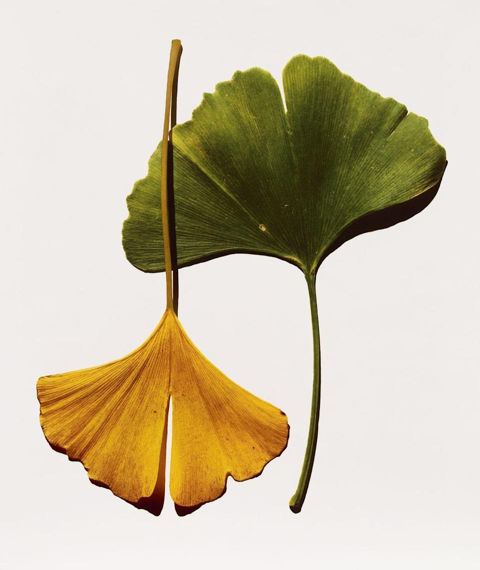 Photo credit: © The Irving Penn Foundation / Courtesy Pace Gallery NY