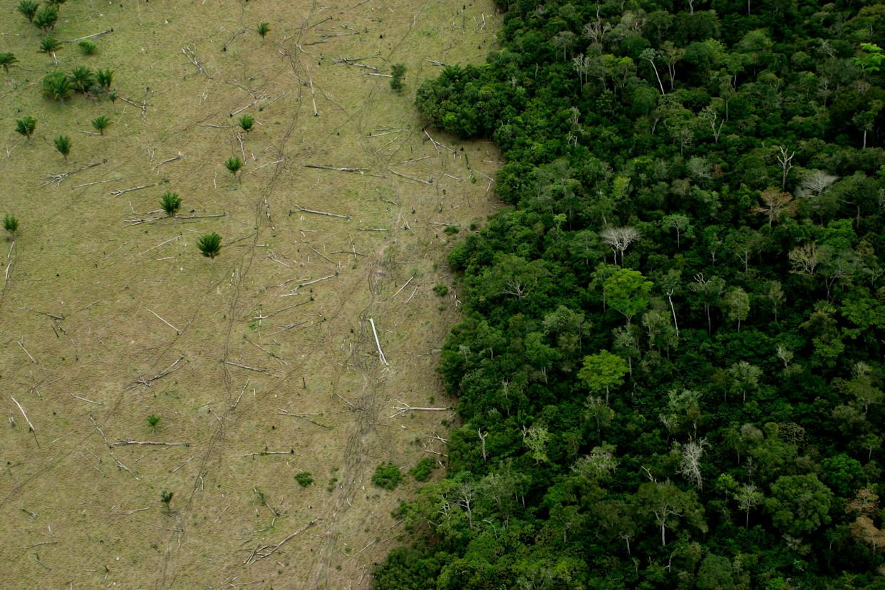 Huge areas of the Amazon are deforested for cattle, timber and other industries. (Photo: LeoFFreitas via Getty Images)