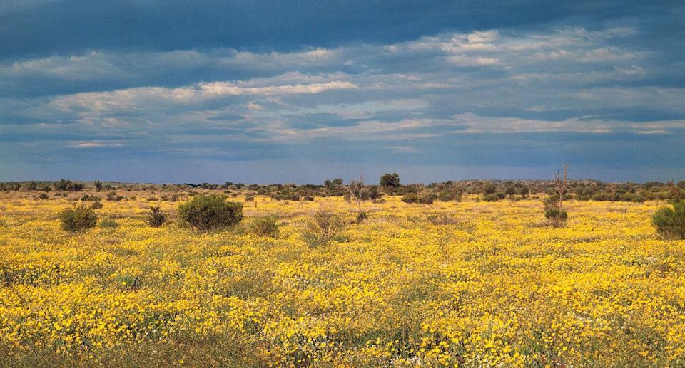 Pictured is Northern Territory's Tanami Desert after rainfall. An earthquake of 5.4 magnitude hit the desert on Thursday.