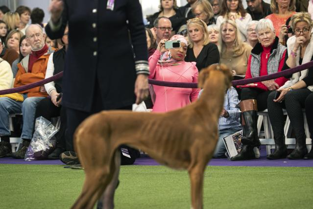 Retired Philadelphia police officer Aliya Taylor (in pink) observes the Azawakh breed compete at the Westminster Kennel Club Dog Show on Sunday, Feb. 9, 2020, in New York. (AP Photo/Wong Maye-E)