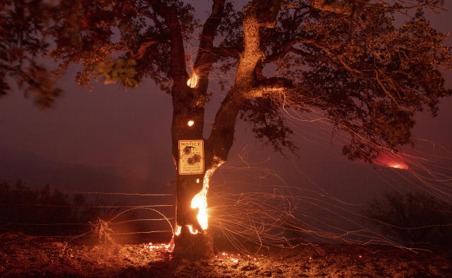 <p>A tree burns from the inside during the Ranch Fire in Clearlake Oaks, Calif., on Sunday, Aug. 5, 2018. (Photo: Josh Edelson/AP) </p>
