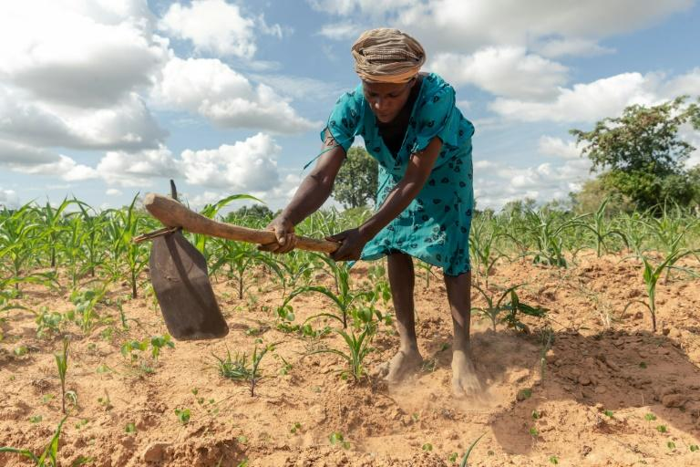A year ago, Josephine Ganye was hit by a devastating cyclone -- now she is struggling with a crippling drought