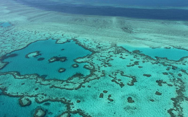Great Barrier Reef off the coast of the Whitsunday Islands - AFP or licensors