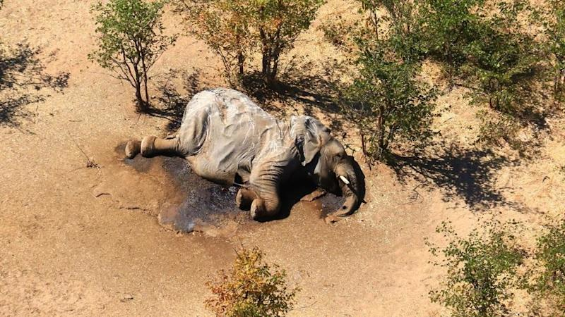 Botswana discovers likely culprit behind mass elephant die-off
