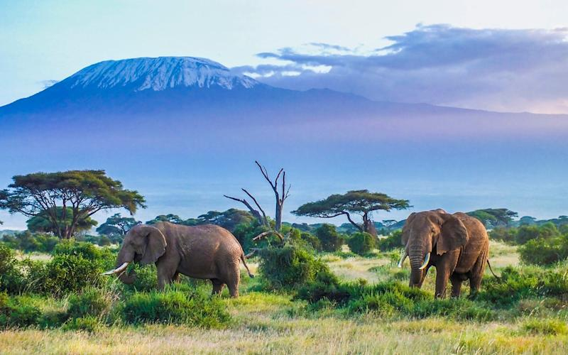 Tanzania is known for its wealth of safari options - istock