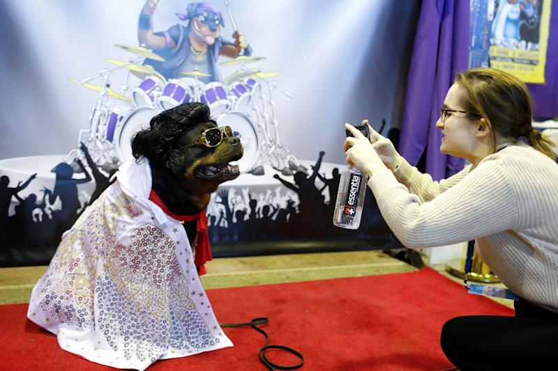 Talos, a rottweiler, is photographed at the Rottapalooza booth during the AKC Meet the Breeds event ahead of the 143rd Westminster Kennel Club Dog Show in New York, Feb. 9, 2019. (Photo: Andrew Kelly/Reuters)