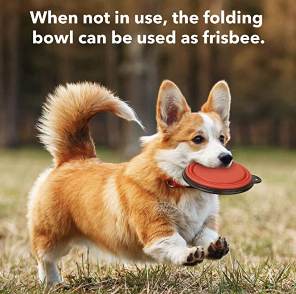Collapsible Dog Pet Folding Bowl, Portable Silicone Travel Bowls for Dogs & Cats. PHOTO: Amazon