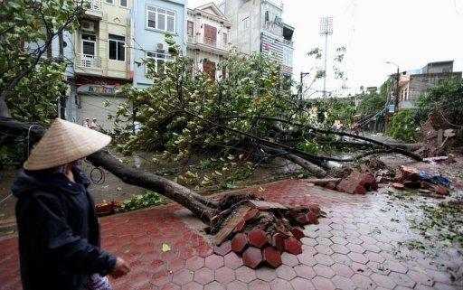 A resident of the nothern Vietnamese city of Nam Dinh looks at fallen trees after the passage of typhoon Son Tinh