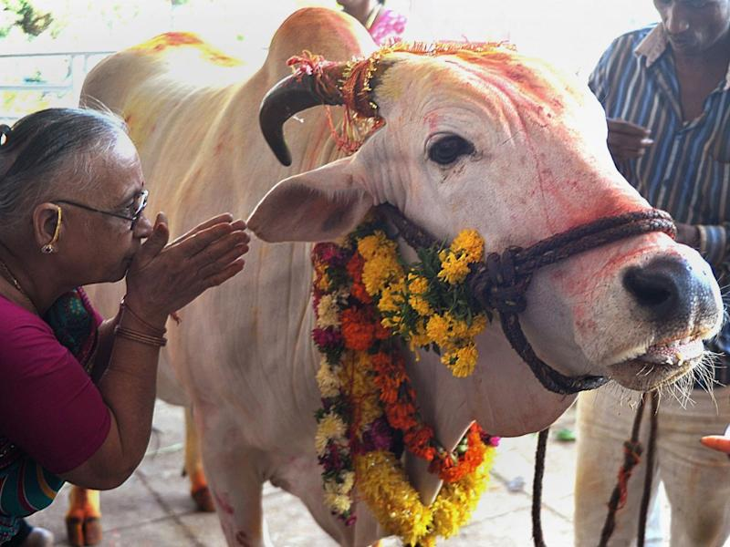Cows are considered sacred by Hindus and their slaughter is illegal in several Indian states: AFP/Getty Images