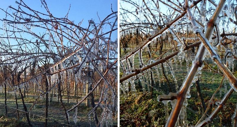 South Australia's Coonawarra Wine region dipped to -3.8C Friday night, which was a freezing 37-year low. Source: coonawarra_wine / Instagram