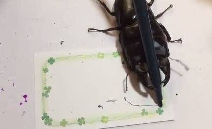 People Are Very Impressed With This Stag Beetle Who Creates Art