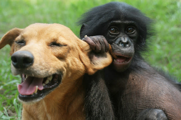 A puppy plays with a baby bonobo perfectly blending Duke University behavioral researcher Brian Hare's recent interests.