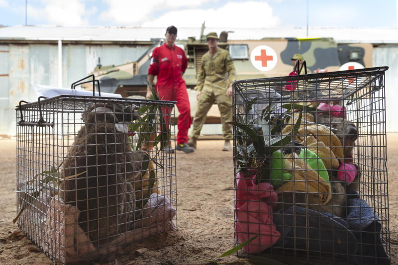 A photo made available by the Australian Department of Defence shows injured koalas rescued by the Australian Army soldiers, New Zealand Army sappers and RSPCA members.