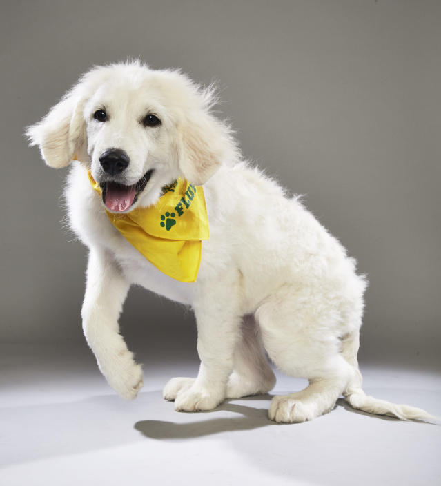 <p>Team: Fluff<br> From: Big Fluffy Dog Rescue<br> (Photo: Animal Planet) </p>