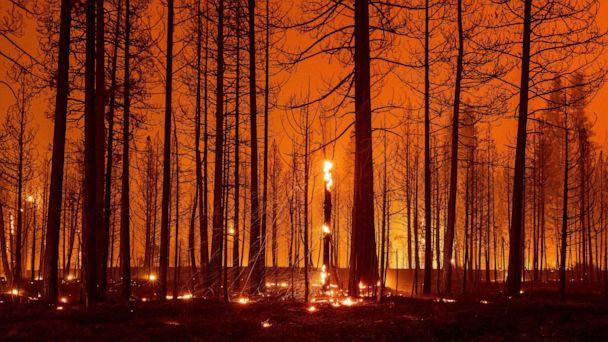 PHOTO: Trees smolder and burn during the Dixie fire near Greenville, Calif., Aug. 3, 2021. (Josh Edelson/AFP via Getty Images)