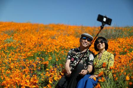 A couple takes a selfie photo in a super bloom of poppies in Lake Elsinore