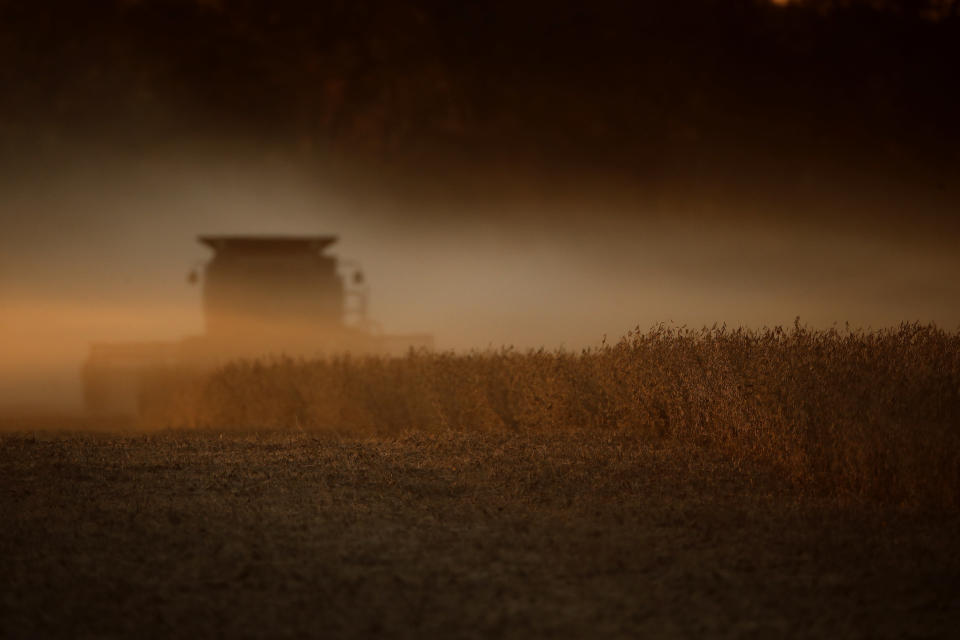 FILE - In this Oct. 19, 2019, file photo soybeans are harvested near Wamego, Kan. The Biden administration said Wednesday, Aug. 18, 2021, that it was banning use of chlorpyrifos, a widely used pesticide long targeted by environmentalists because it poses risks to children and farm workers. Chlorpyrifos is applied on numerous crops, including soybeans, fruit and nut trees, broccoli and cauliflower. It has been linked to potential brain damage in children.(AP Photo/Charlie Riedel, File)