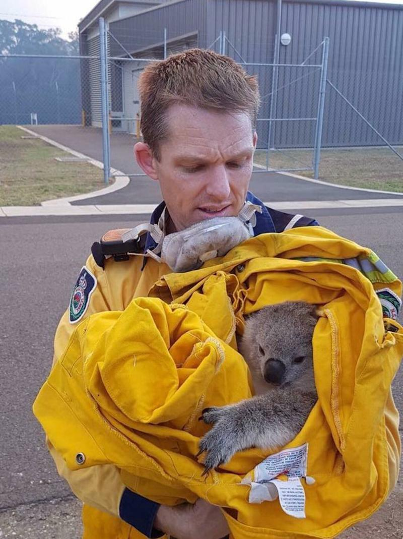 Fire fighters have found wildlife in the bushfire zone. Source: @NSWRFS/ Twitter