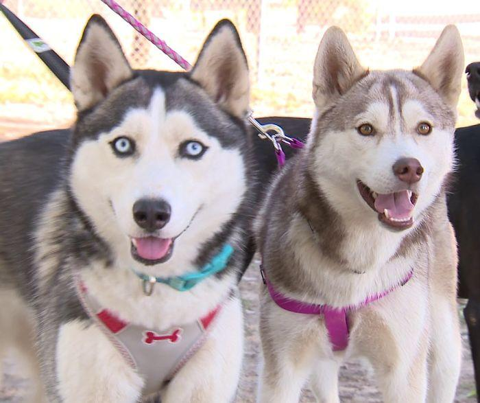 Someone found these two huskies abandoned at a dog park with the saddest of notes