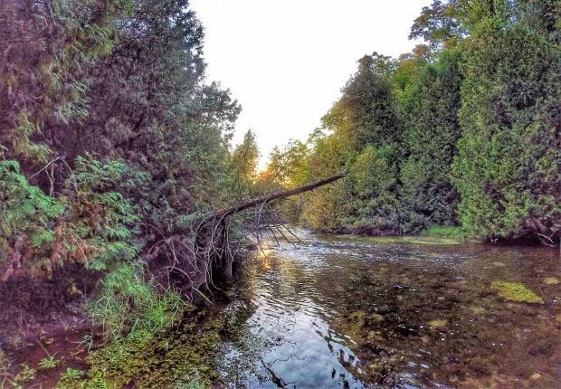 The West Credit River is a tributary of the larger Credit River. With its headwaters within the boundaries of Erin, the coldwater stream flows eastward through the hamlet of Belfountain before it meets with the main branch of the Credit River.