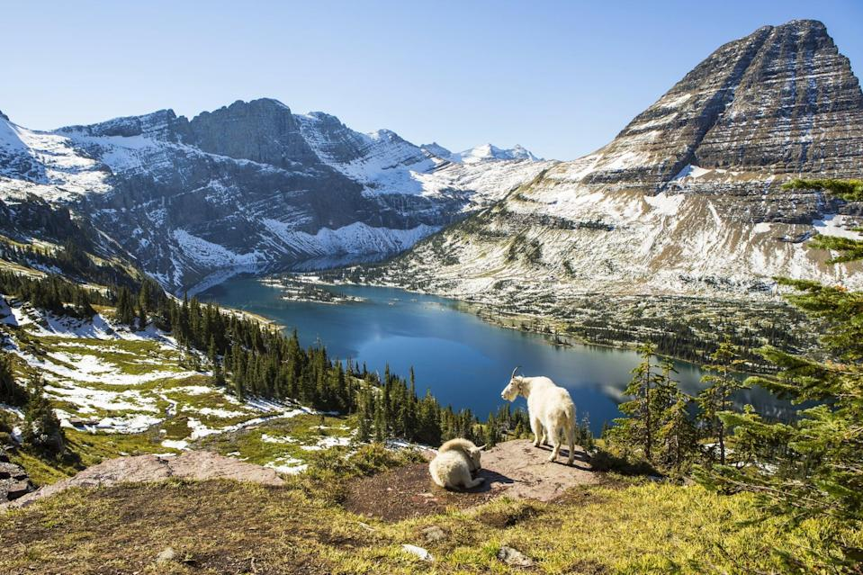 <p>Glacier National Park is sure to take your breath away with every gorgeous view you see.</p>