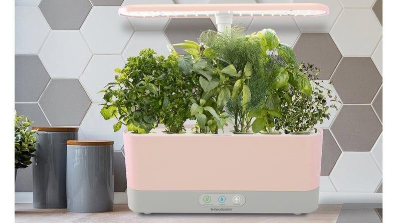You don't need garden space for beautiful fresh herbs.