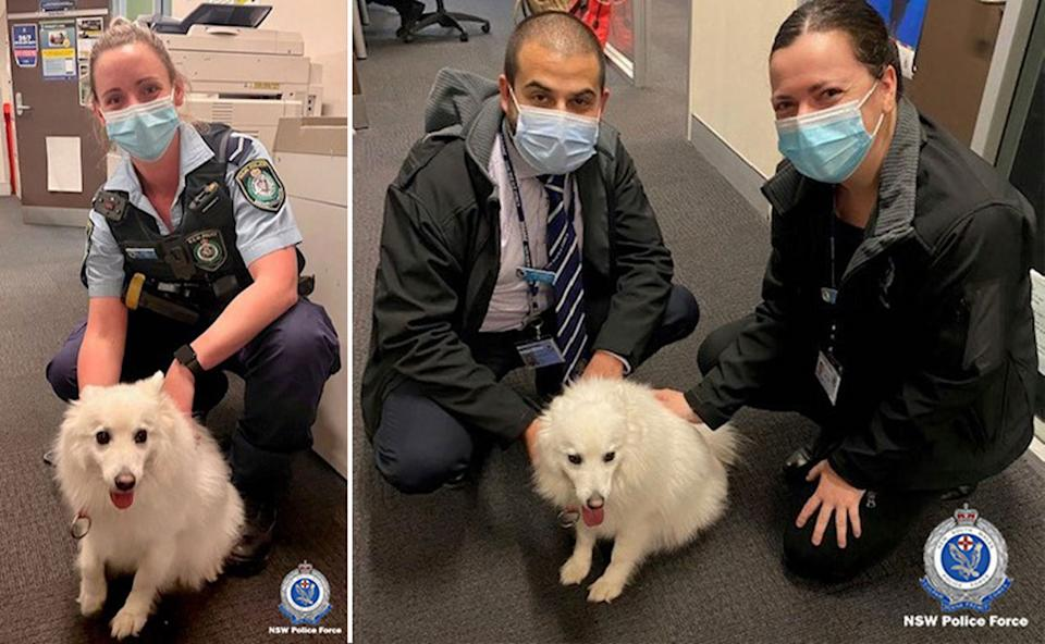 Pictured is police from Fairfield in Sydney's south west with Atlas at the station.