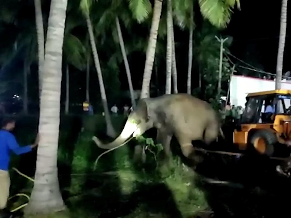 <p>The elephant will now be released into the Hosur forest area surround the village.</p>Newslions/SWNS