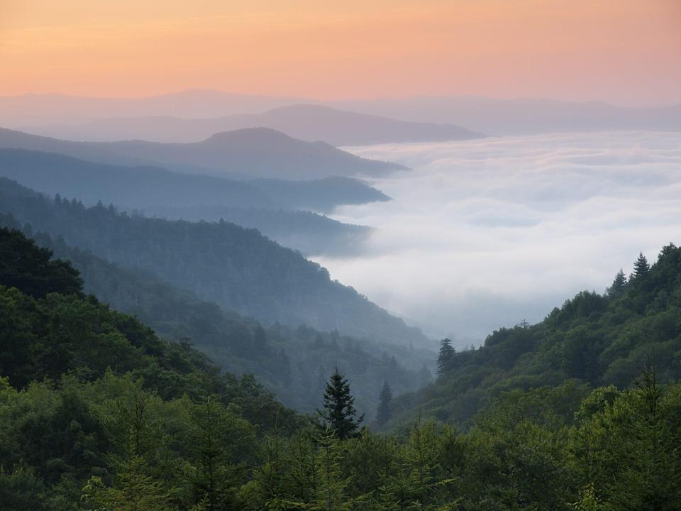 <p>The Smokies are a subrange of the Appalachian Mountains that are located along the North Carolina-Tennessee border. They're covered in forests that give the range its name; the vegetation emits vapors that appear as fog or smoke rising above the mountains.</p>