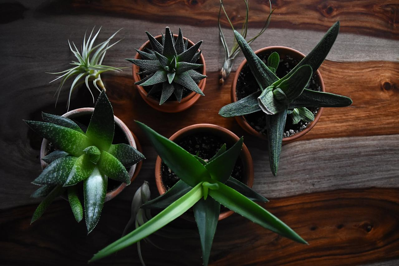 """<p><a href=""""https://www.popsugar.com/home/Best-Indoor-Plants-Dorms-46505523"""" target=""""_blank"""" class=""""ga-track"""" data-ga-category=""""Related"""" data-ga-label=""""https://www.popsugar.com/home/Best-Indoor-Plants-Dorms-46505523"""" data-ga-action=""""In-Line Links"""">Plants</a> require little to no gift-wrapping and even do their own little bit to purify the air. Plus, that vibrant greenery in the home is sure to be a welcome presence during the Winter months.</p>"""