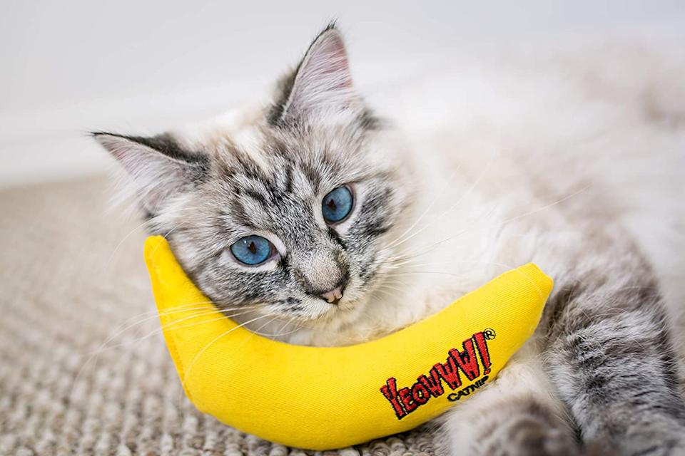 """Hello? Sorry, I'm busy playing with my banana. Call you later."" (Photo: Amazon)"