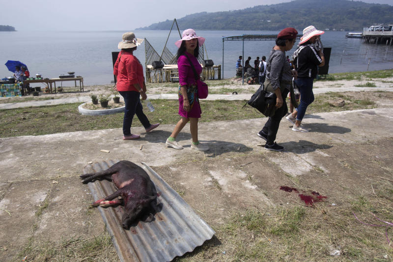 In this Friday, Oct. 25, 2019, photo, visitors walk past a slaughtered pig during Toba Pig and Pork Festival, in Muara, North Sumatra, Indonesia. Christian residents in Muslim-majority Indonesia's remote Lake Toba region have launched a new festival celebrating pigs that they say is a response to efforts to promote halal tourism in the area. The festival features competitions in barbecuing, pig calling and pig catching as well as live music and other entertainment that organizers say are parts of the culture of the community that lives in the area. (AP Photo/Binsar Bakkara)