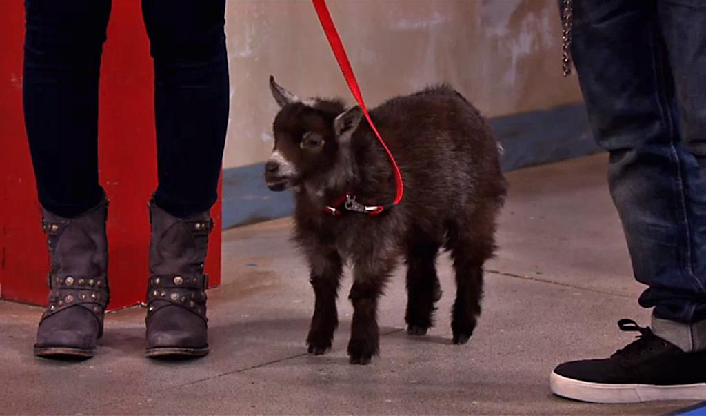 "The ""Sam & Cat"" episode, ""#NewGoat."""