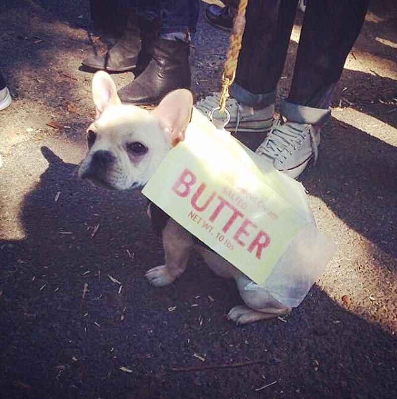 <p>Who doesn't love butter? For the DIY pet owner, this is an easy option. Just cut a piece of cardboard. Bend the cardboard into a rectangular prism shape that will fit around your dogs body. Paint the cardboard yellow. Add your favorite brand name, and attach straps as if it were a backpack. </p><p><i>Photo: Instagram/ @suzannalee</i></p>
