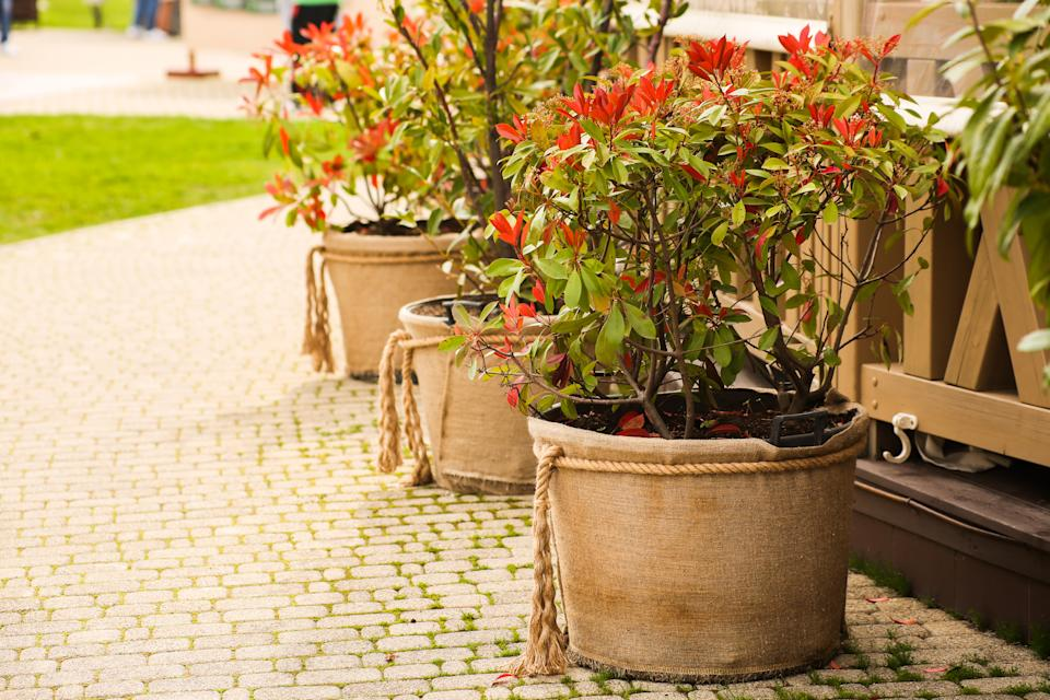 Landscaping garden or park, flower pots wrapped in burlap cloth, rustic vintage style. High quality photo