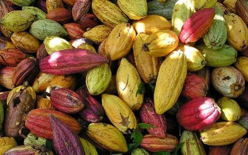 The most ethical chocolate starts with the bean - Getty Images