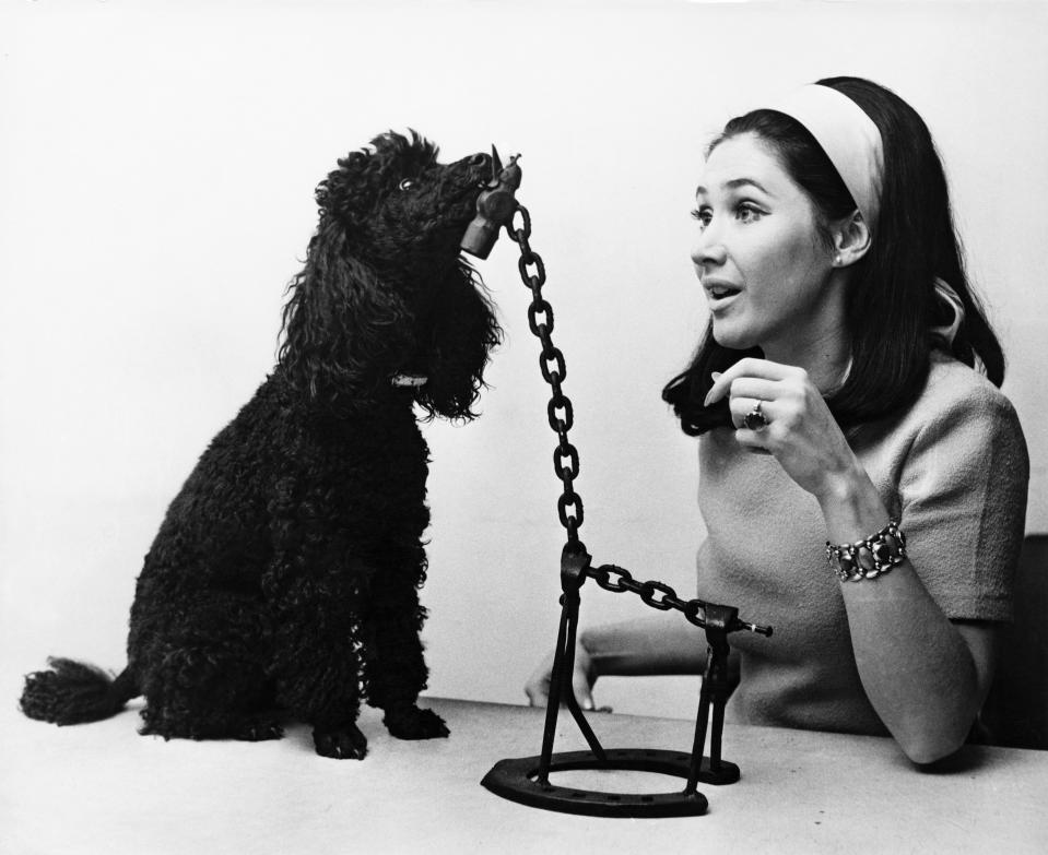 English television presenter Jan Leeming and her pet poodle Sheba inspect a model of a giraffe, one of the pieces of 'instant art' on the BBC children's programme 'Tom Tom', at the BBC TV Centre in London, 24th November 1969. Leeming is a new member of the 'Tom Tom' team.  (Photo by Frank Barrett/Keystone/Hulton Archive/Getty Images)